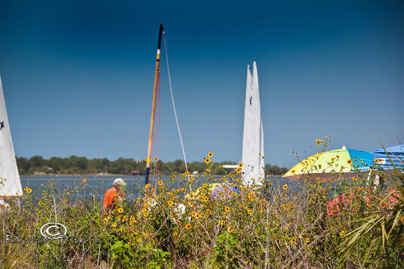 Wild Flowers Blooming on Atsena Otie Key - Cedar Key Small Boat Show - Photo by Pat Bonish