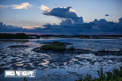 Even at low tide we find Dolphins - Photo by Pat Bonish, Cedar Key Florida