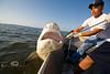 13 year old TJ Pulling in a Lemon Shark off the Coast of Cedar Key - Photo by Pat Bonish