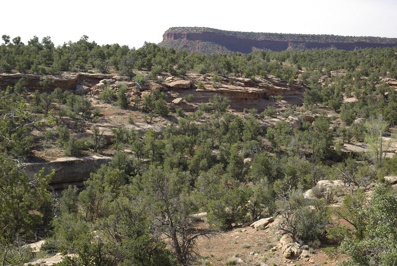 Typical Cedar Mesa Canyon, near Natural Bridges NM
