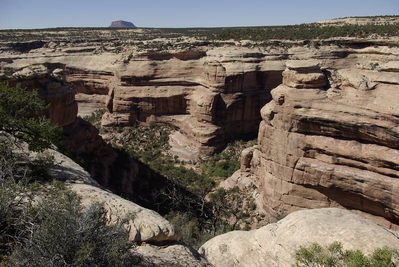 Todie Canyon, Cedar Mesa