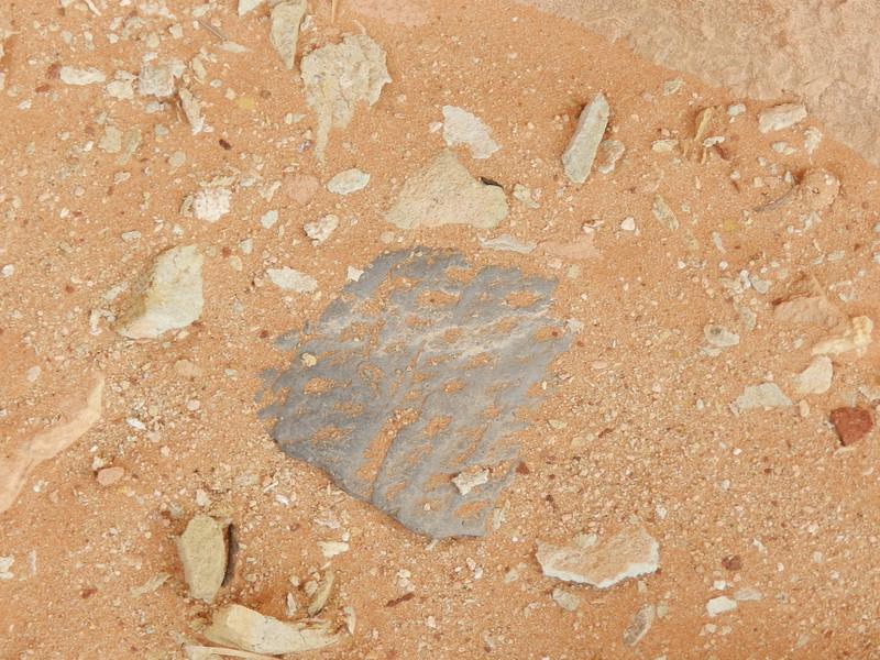 Broken Pottery, near Sheiks Canyon