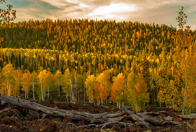 Lava and Aspen in Fall Colors