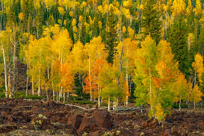 Aspen and Lave in Fall Colors