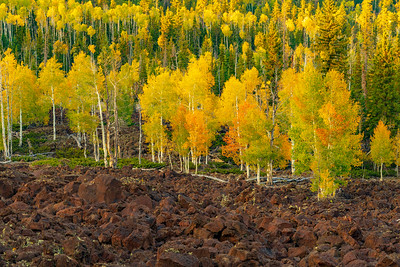 Lava Field Surrounded By Apen in Fall Colors