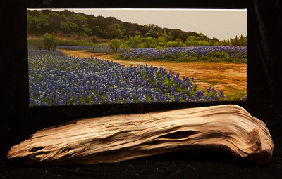 Bluebonnet Road-Sold
