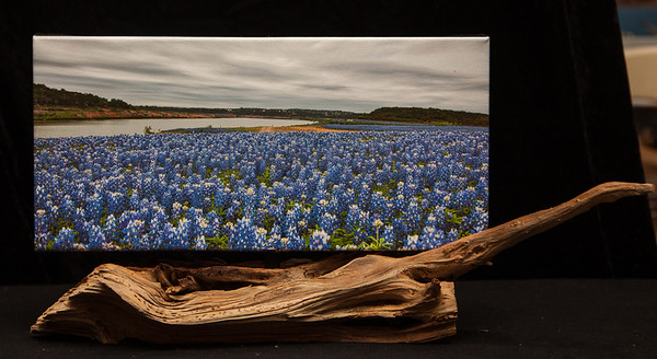 Colorado River Bluebonnets -