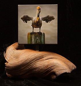 Pelican Drying - SOLD
