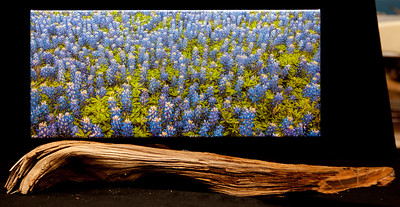 Bluebonnet Madness