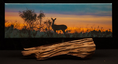 Whitetail Evening - SOLD