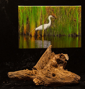 Egret Hunting-SOLD