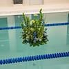 20141024-Cedar Village Pool-7