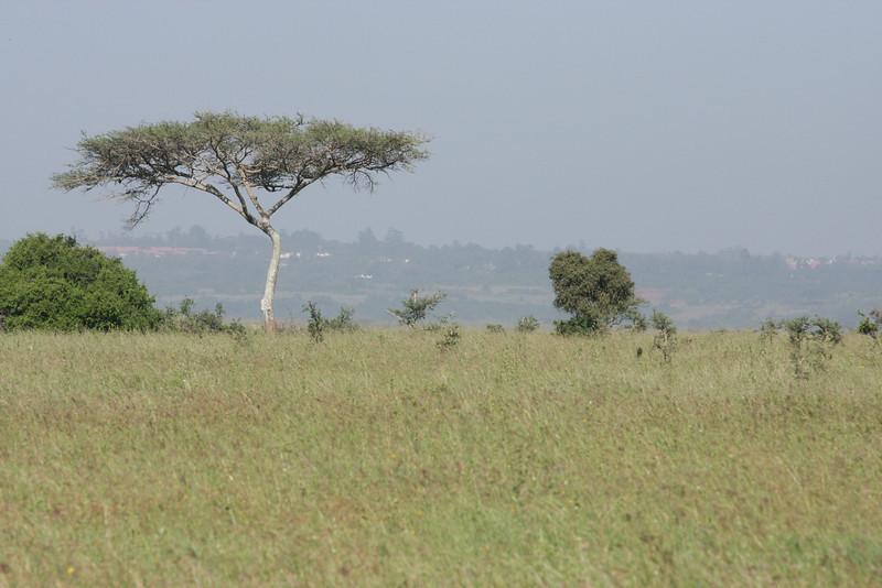 Nairobi (119)