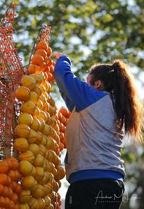 Oranges-14