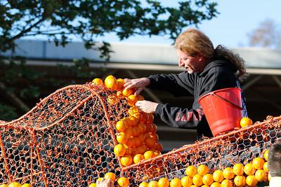 Oranges-18