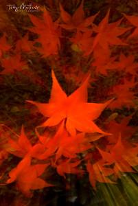 Autumn starburst