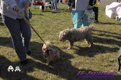 NBHA 10th Annual Dog Walk - Event Photos
