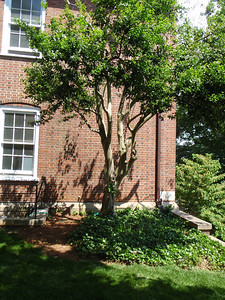 Spot for proposed bench placement (under crepe myrtle in front of the Science/Math Building)