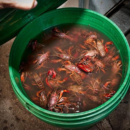 2016 2nd Annual Polonia Restaurant Crawfish Boil