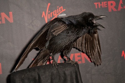 "LOS ANGELES, CA - APRIL 23: The Raven, ""Suge"" at the Los Angeles premiere of Relativity Media's 'The Raven' held at the Los Angeles Theatre on April 23, 2012 in Los Angeles, California. Photo taken by Tom Sorensen/Moovieboy Pictures."