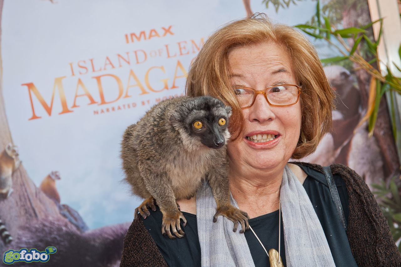 """LOS ANGELES, CA - MARCH 29: Dr Patricia C. Wright and a lemur named """"Taj"""" arrive at the premiere of 'Island Of Lemurs: Madagascar' at California Science Center on Saturday, March 29, 2014 in Los Angeles, California. (Photo by Tom Sorensen/Moovieboy Pictures)"""