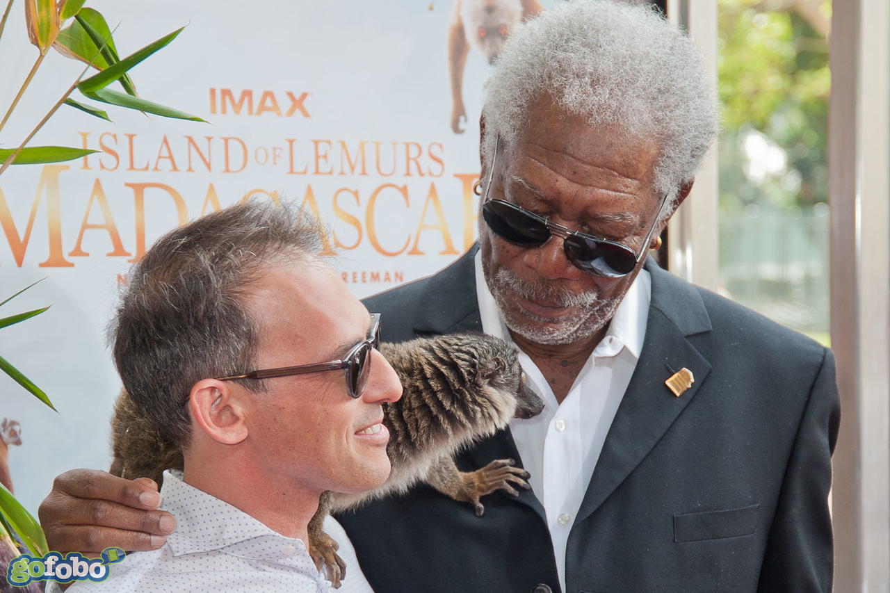 """LOS ANGELES, CA - MARCH 29: Writer/Producer Drew Fellman, actor Morgan Freeman and a lemur named """"Taj"""" arrive at the premiere of 'Island Of Lemurs: Madagascar' at California Science Center on Saturday, March 29, 2014 in Los Angeles, California. (Photo by Tom Sorensen/Moovieboy Pictures)"""