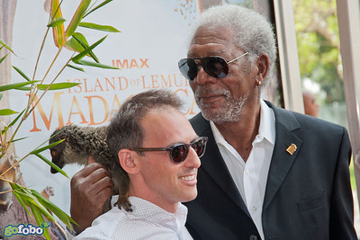 "LOS ANGELES, CA - MARCH 29: Writer/Producer Drew Fellman, actor Morgan Freeman and a lemur named ""Taj"" arrive at the premiere of 'Island Of Lemurs: Madagascar' at California Science Center on Saturday, March 29, 2014 in Los Angeles, California. (Photo by Tom Sorensen/Moovieboy Pictures)"