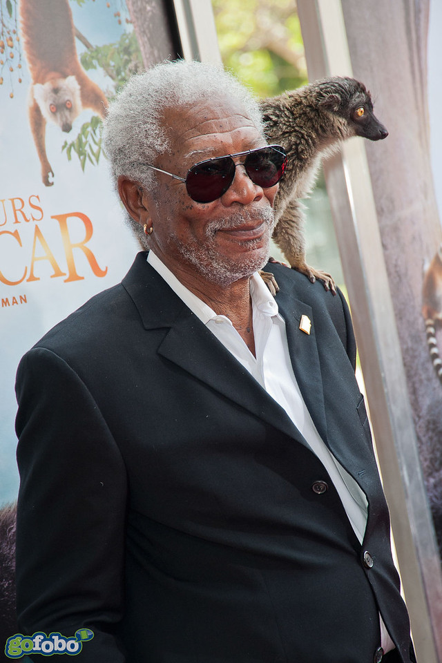 """LOS ANGELES, CA - MARCH 29: Actor Morgan Freeman and a lemur named """"Taj"""" arrive at the premiere of 'Island Of Lemurs: Madagascar' at California Science Center on Saturday, March 29, 2014 in Los Angeles, California. (Photo by Tom Sorensen/Moovieboy Pictures)"""