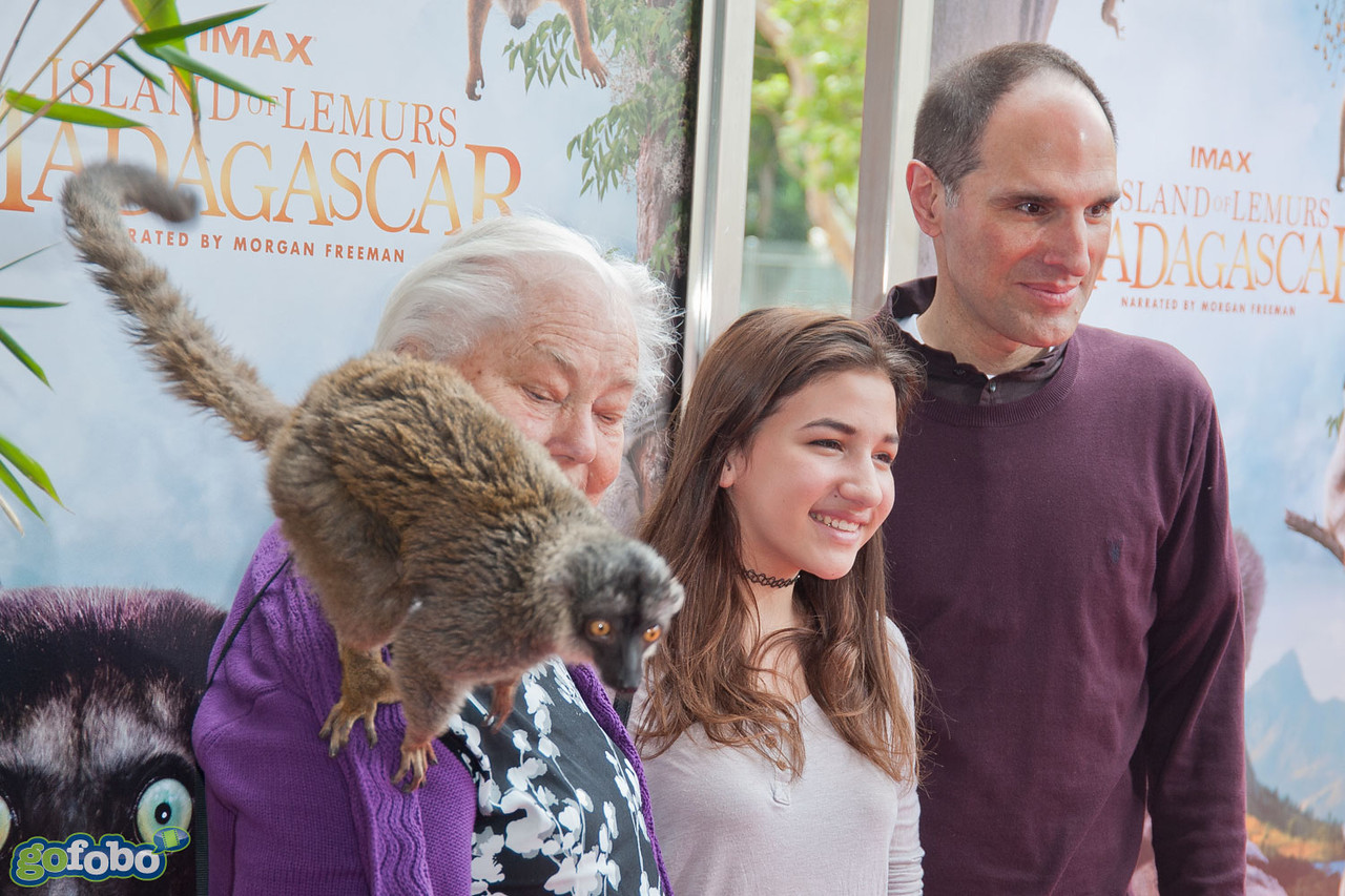 """LOS ANGELES, CA - MARCH 29: Producer Jon Jashni, guests and a lemur named """"Taj"""" arrive at the premiere of 'Island Of Lemurs: Madagascar' at California Science Center on Saturday, March 29, 2014 in Los Angeles, California. (Photo by Tom Sorensen/Moovieboy Pictures)"""