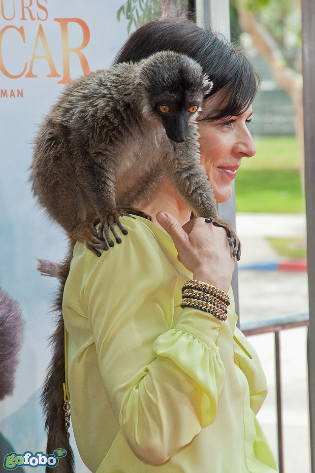 """LOS ANGELES, CA - MARCH 29: Actress Perrey Reeves and a lemur named """"Taj"""" arrive at the premiere of 'Island Of Lemurs: Madagascar' at California Science Center on Saturday, March 29, 2014 in Los Angeles, California. (Photo by Tom Sorensen/Moovieboy Pictures)"""