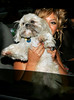 13 July 2006 - New York, NY - Beyonce Knowles proudly displays 'Munchie', her shih-tzu puppy as they depart the CBS Broadcasting Center.  Photo Credit Jackson Lee
