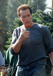 EXC: I'll Be Back…For That Christmas Tree! Arnold Schwarzenegger Picks Out His Festive Fern