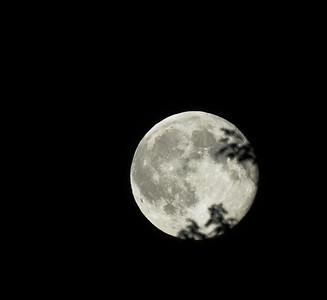 Blue Moon Through Whispering Leaves