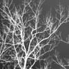"I'm Feeling Very Negative<br /> by Lora Mosier<br /> <br /> <a href=""http://loramosier.wordpress.com"">http://loramosier.wordpress.com</a>"