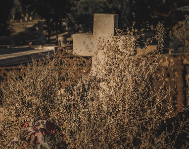 Withered by Weeds
