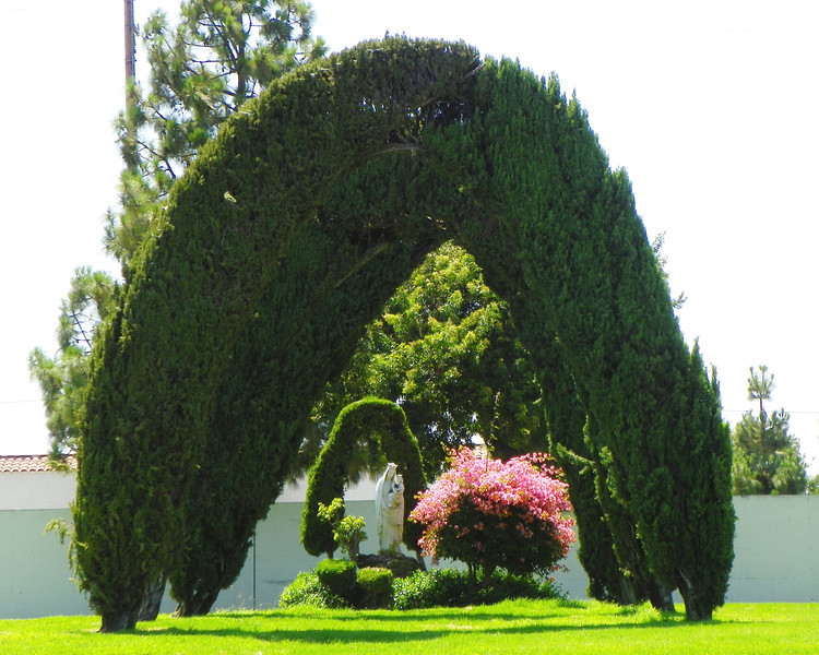 Arch Trees