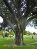 Tree - 3