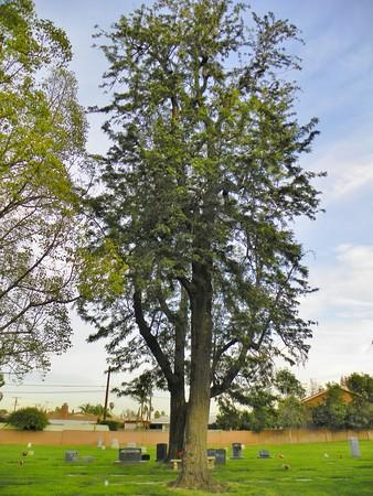 Tree - 4
