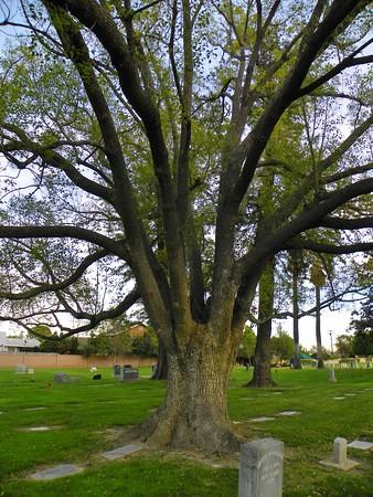 Tree - 5