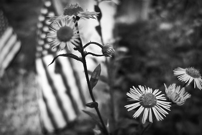 Cemetery wildflowers, Trinity Church Cemetery & Mausoleum, NYC
