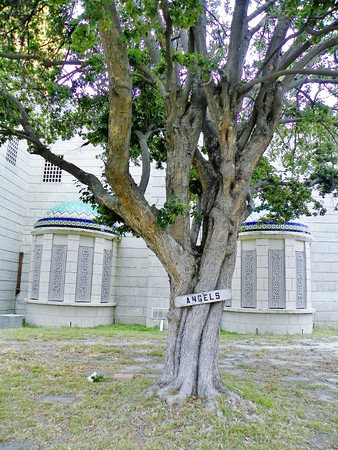 """""""Angels"""" on the tree defines the adjacent area as the burial place of hundreds of newborns, stillborns and very young babies."""