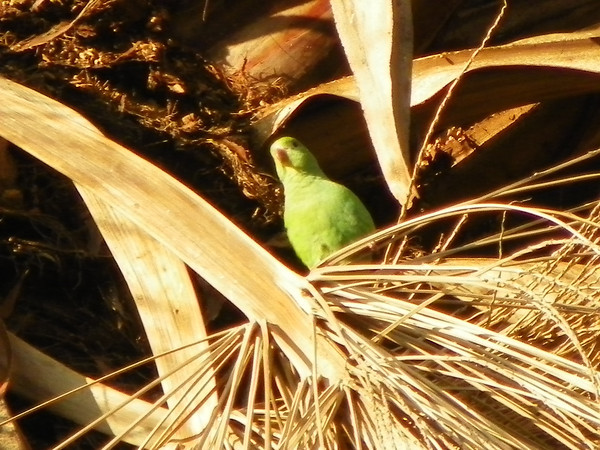 Parrot in Palm - 2