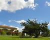 Mausoleum & Tree