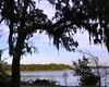 Overlooking the Wilmington River