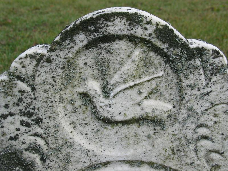 Bird (closeup)