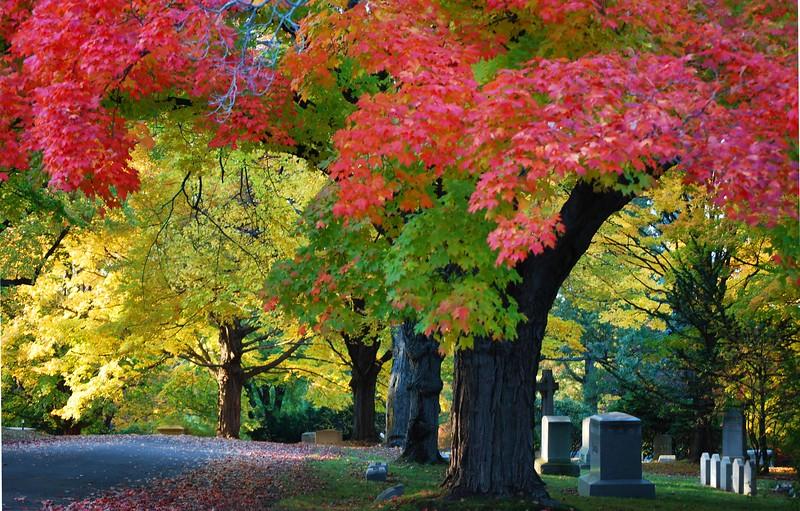 Cedar-Hill-Fall 179-B