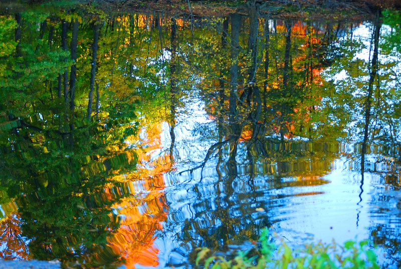 An autumn reflection.