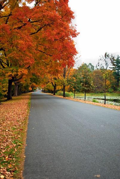 Cedar-Hill-Fall 010-B