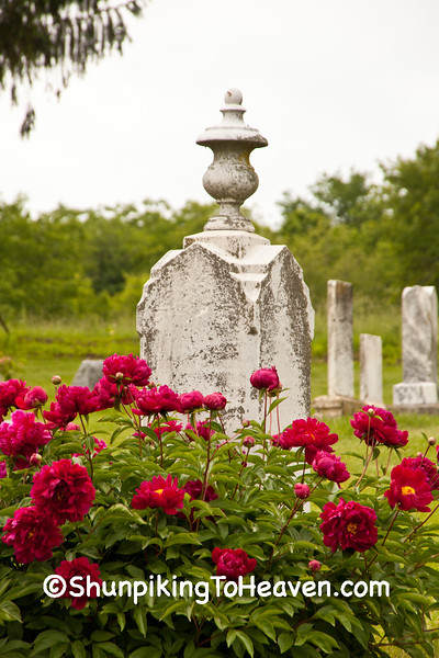 Red Peonies at Mt. Vernon Cemetery, Green County, Wisconsin