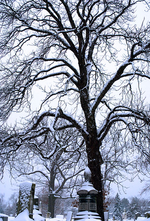 Tree in Snow 2012